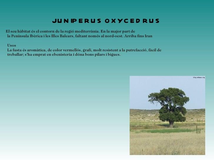 <ul>Ilex aquifolium Es troben grèvols a l'oest d'Àsia i Europa formant part, amb exemplars solts, del sotabosc de rouredes...
