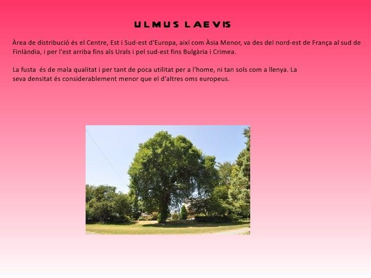 <ul>Taxus baccata </ul>Taxus baccata, el teix comú o teix negre, és una espècie del gènere Taxus originària de l'Europa oc...