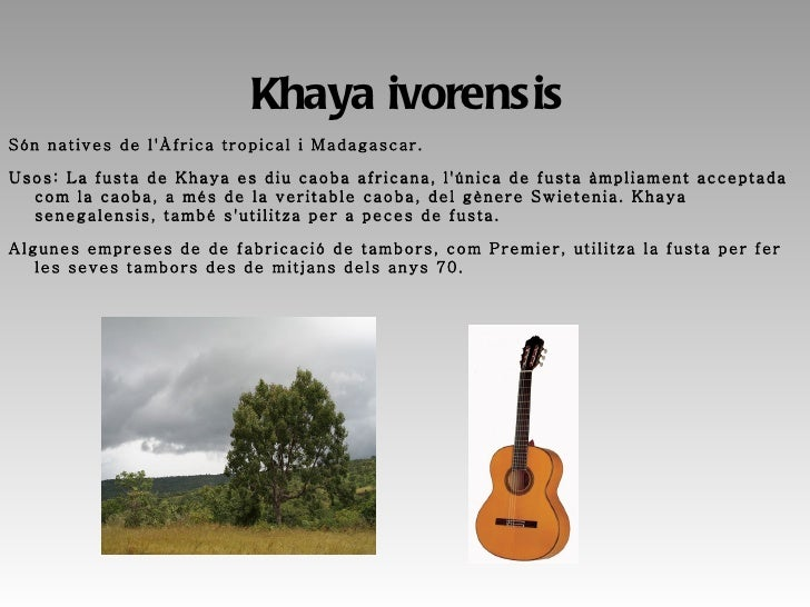 <ul>Guarea cedrata És nativa d'Àfrica tropical, centre i Sudamérica. Usos: La fusta és important, les spp. africanes es co...