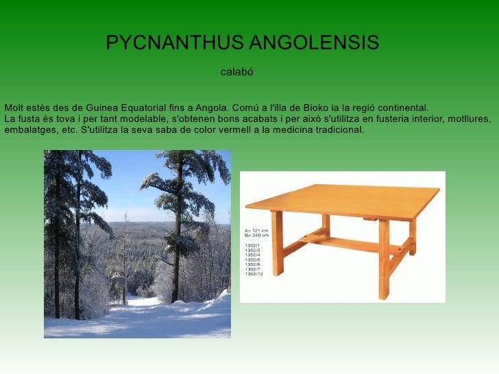 <ul>Pinus halepensis . Pinus halepensis, el Pi blanc, Pincarrasco, Pi d'Alep o Pi de Jerusalén1 és una espècie arbòria de ...