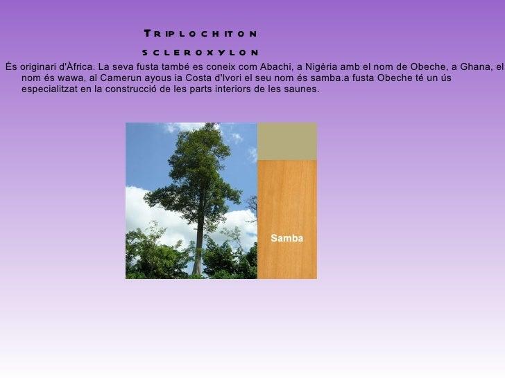<ul>TARRIETIA UTILIS SPRAG Països productors: Ghana, Sierra Leone, Gabon Usos: mobles, construcció per a exteriors, ebenis...