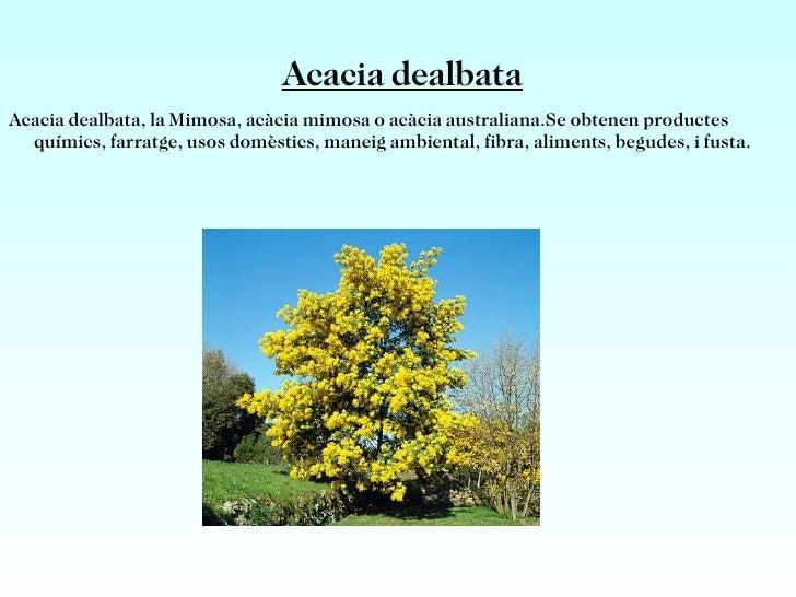 <ul>Acacia anastema És un arbre d'Austràlia occidental, dins d'una petita zona semiàrida a l'est de Carnarvon.Su fusta res...