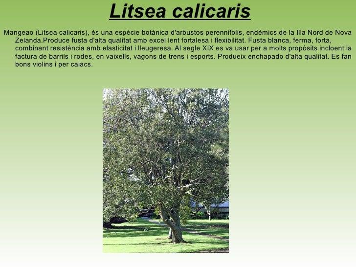 <ul>Diospyros humilis Diospyros humilis, banús de Queensland, és un petit arbre d'Austràlia que es troba en tot Queensland...