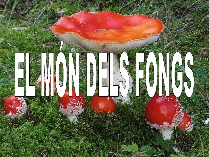 EL MÓN DELS FONGS