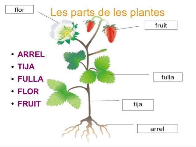 Plantes : l'arbre - MFG Education