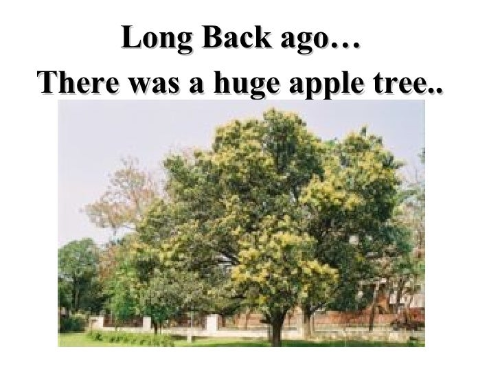 There was a huge apple tree.. Long Back ago…