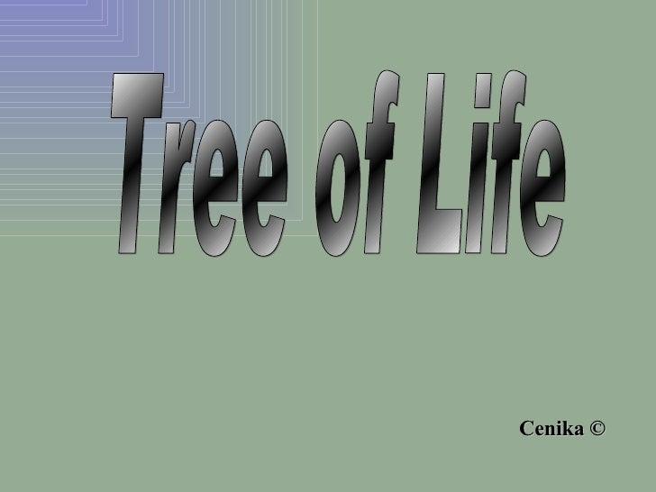 Tree of Life © Cenika