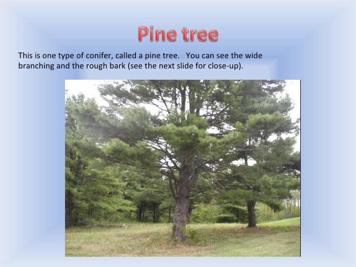 Trees Slide 2