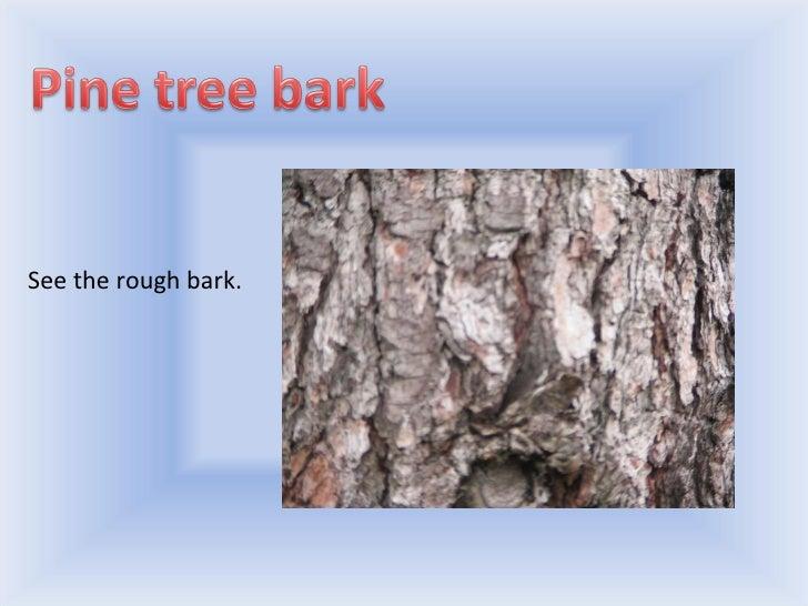 Trees Slide 3