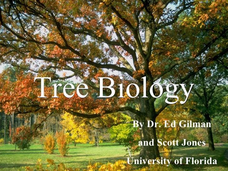 Tree Biology By Dr. Ed Gilman and Scott Jones University of Florida