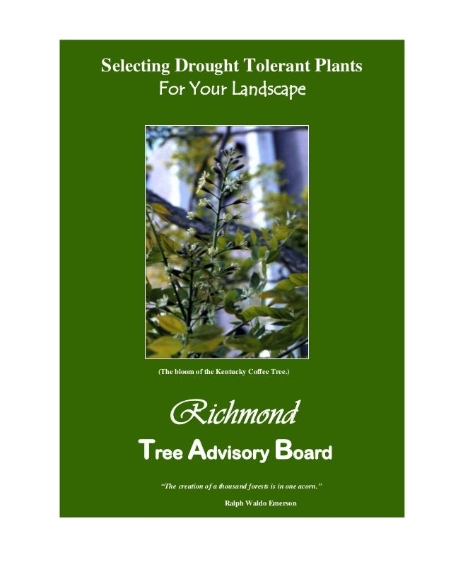 Selecting Drought Tolerant Plants        For Your Landscape       (The bloom of the Kentucky Coffee Tree.)          Richmo...