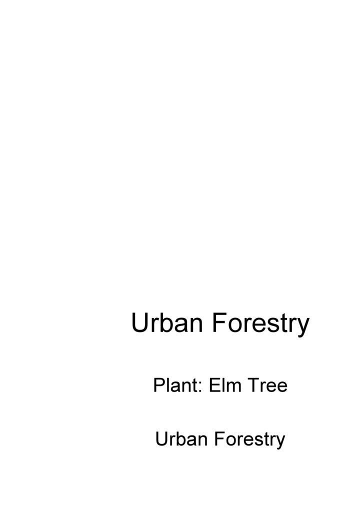 Urban Forestry Plant: Elm Tree Urban Forestry