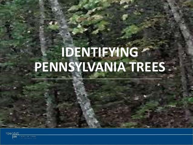 Tree identification 1 identifying pennsylvania trees sciox Gallery