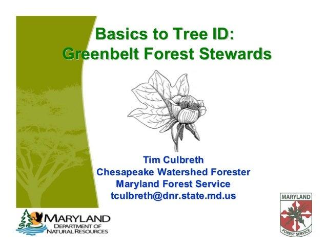 Basics to Tree ID:Basics to Tree ID:Greenbelt Forest StewardsGreenbelt Forest StewardsTim CulbrethTim CulbrethChesapeake W...