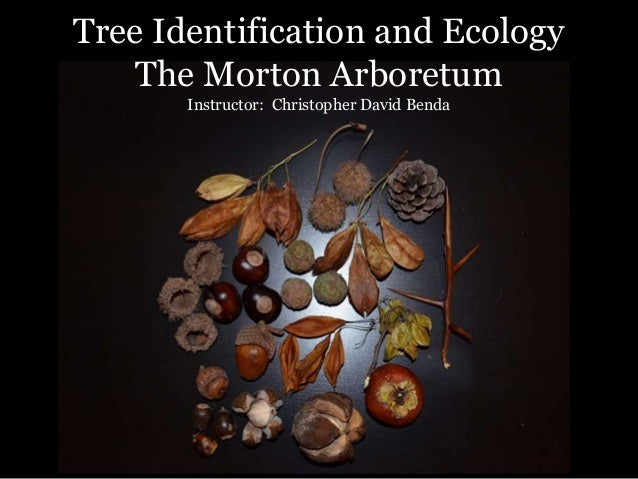 Tree Identification and Ecology The Morton Arboretum Instructor: Christopher David Benda