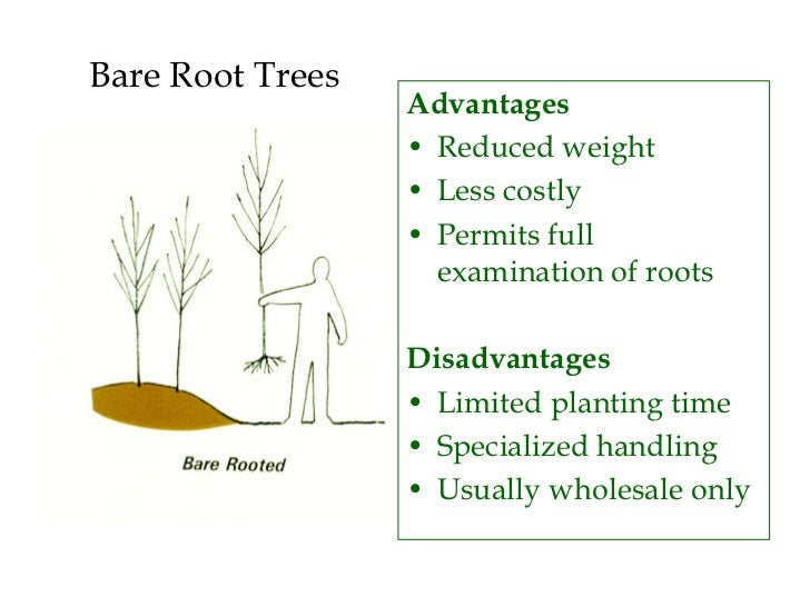 Tree Installation And Establishment Ppt