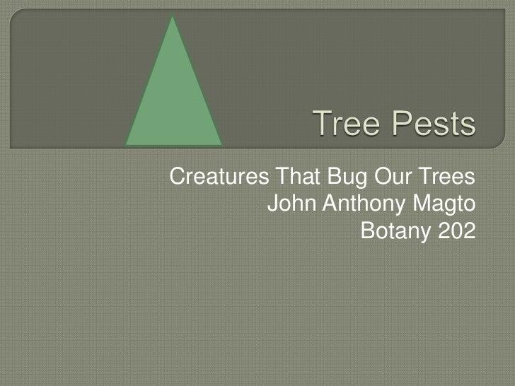 Creatures That Bug Our Trees         John Anthony Magto                 Botany 202
