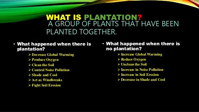 advantages of tree plantation essay