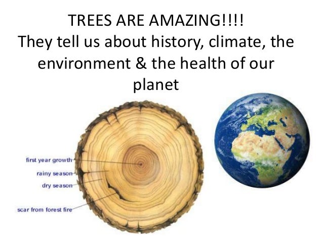 Tree Presentation For Young Green Minds
