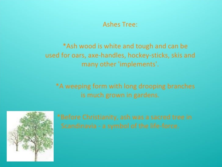 Ashes Tree: *Ash wood is white and tough and can be used for oars, axe-handles, hockey-sticks, skis and many other 'implem...