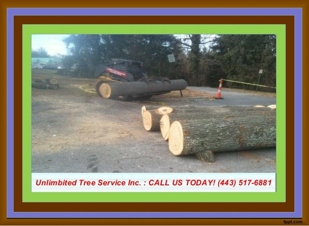 Unlimbited Tree Service Inc. : CALL US TODAY! (443) 517-6881Unlimbited Tree Service Inc. : CALL US TODAY! (443) 517-6881