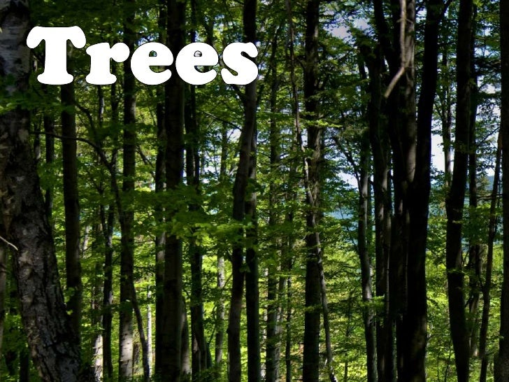 Trees<br />