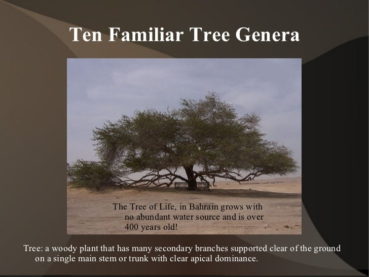 Ten Familiar Tree Genera <ul>Tree: a woody plant that has many secondary branches supported clear of the ground on a singl...