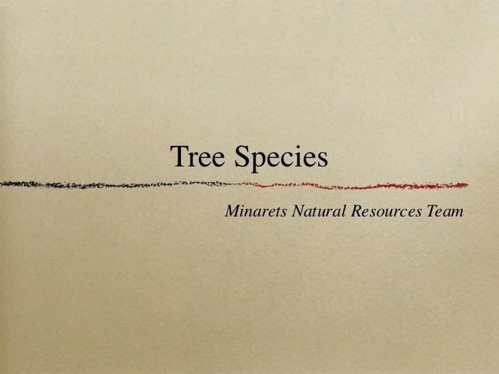 Tree Species    Minarets Natural Resources Team
