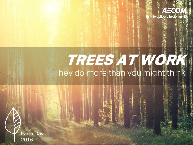 TREES AT WORK They do more than you might think Earth Day 2016