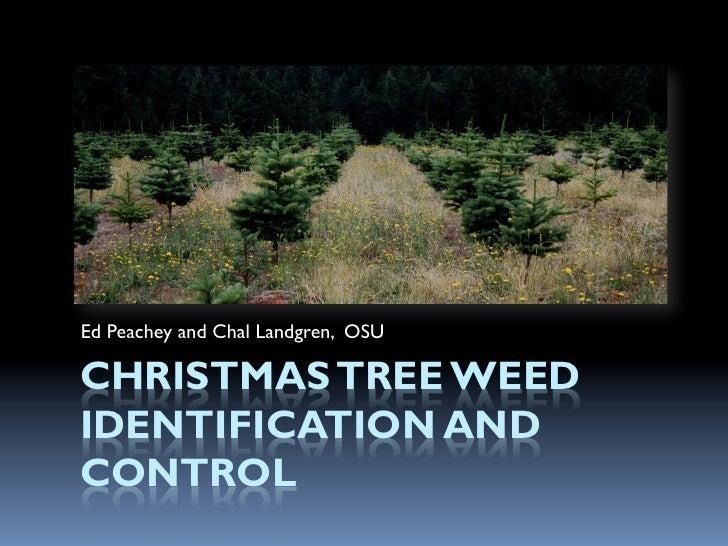Ed Peachey and Chal Landgren, OSUCHRISTMAS TREE WEEDIDENTIFICATION ANDCONTROL
