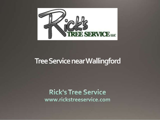 Tree Service near Wallingford