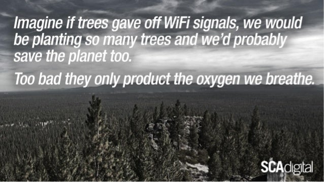 If only all the Trees in the World provided Wifi