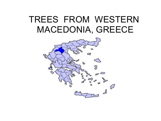 TREES FROM WESTERN MACEDONIA, GREECE