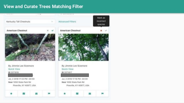 View and Curate Trees Matching Filter