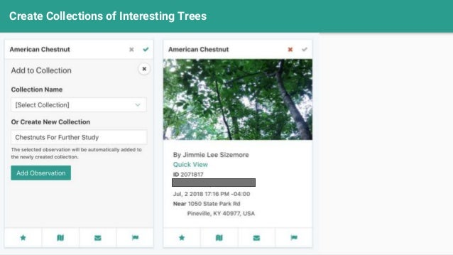 Create Collections of Interesting Trees