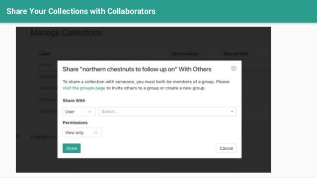 Share Your Collections with Collaborators