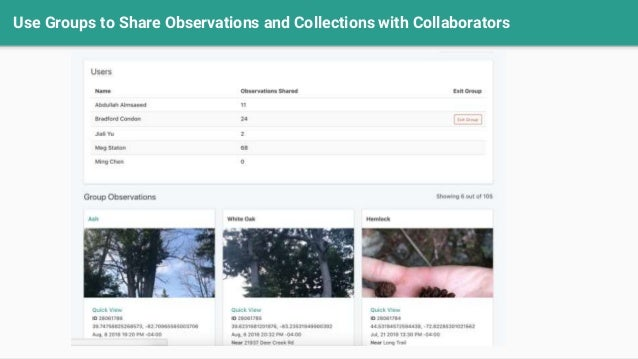 Use Groups to Share Observations and Collections with Collaborators