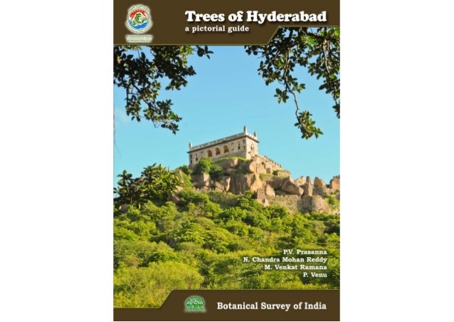 Trees of hyderabad