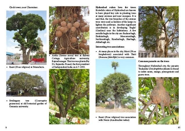 Trees of hyderabad