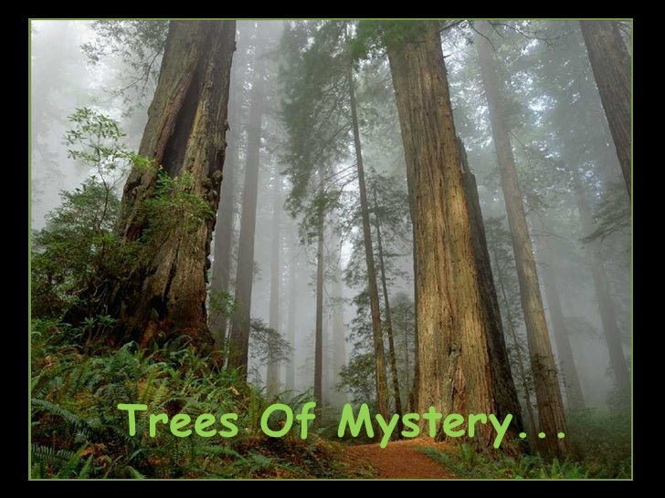 Trees Of Mystery...