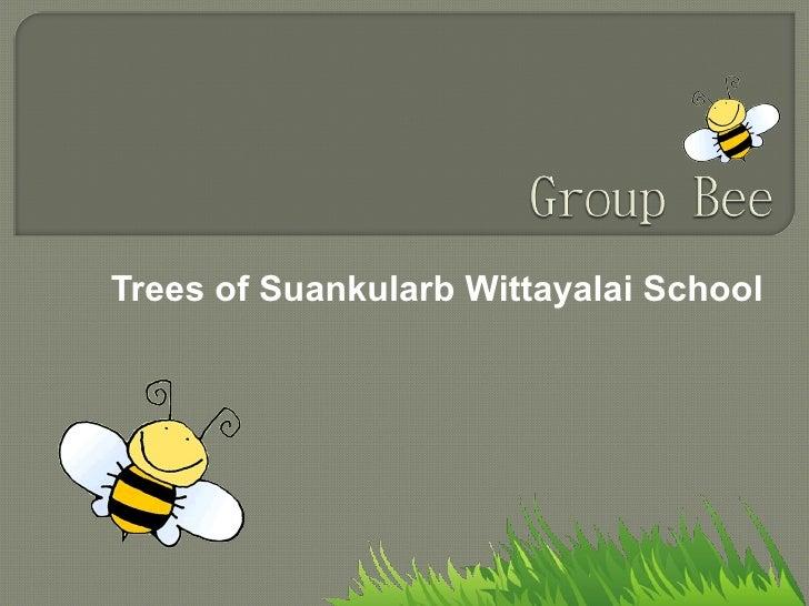 Trees of Suankularb Wittayalai School