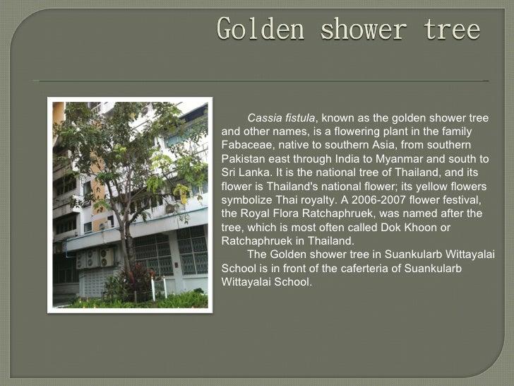 Trees of suankularb wittayalai school by group bee Slide 2
