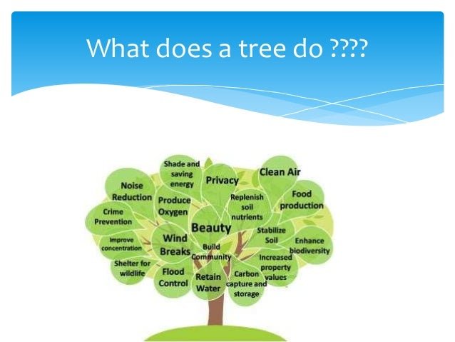 essay about importance of trees