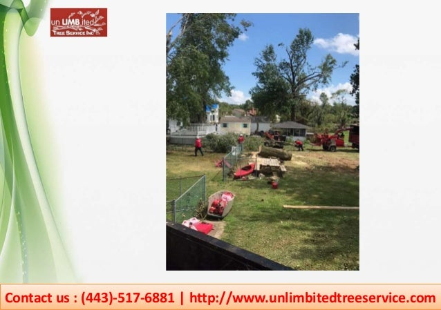 Contact us : (443)-517-6881 | http://www.unlimbitedtreeservice.com