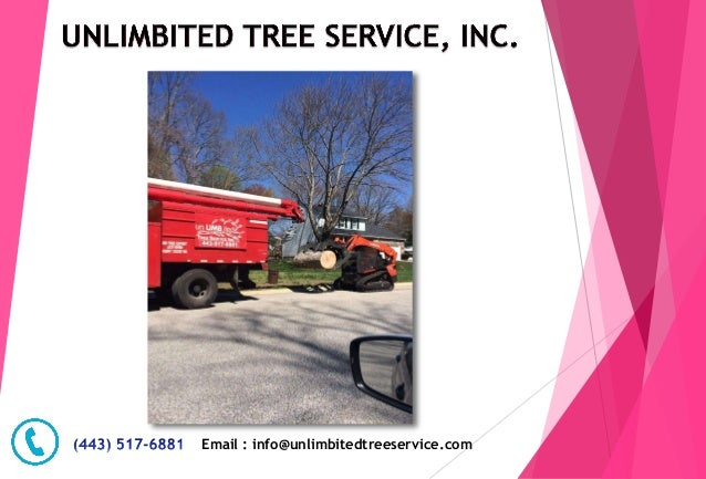 Email : info@unlimbitedtreeservice.com