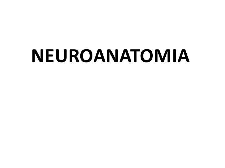 NEUROANATOMIA<br />