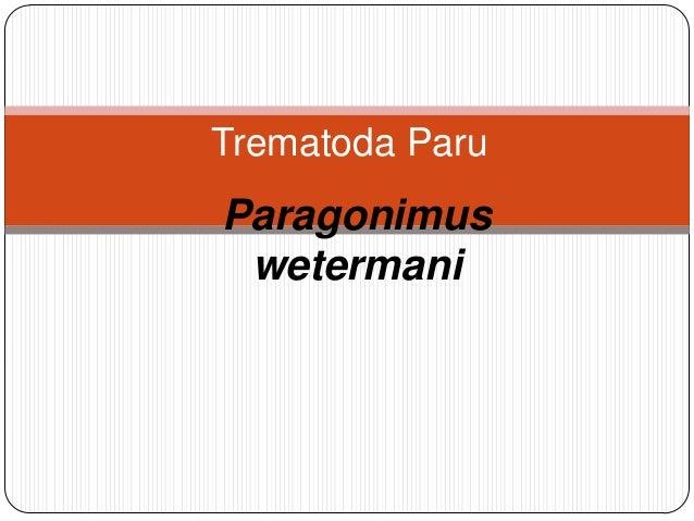 Trematoda ParuParagonimus wetermani