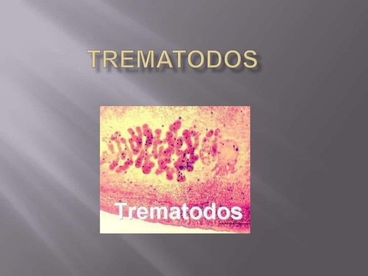 Los trematodos son una clase de       gusanos del filo de losplatelmintos, de cuerpo foliáceo. El  tubo digestivo es gener...