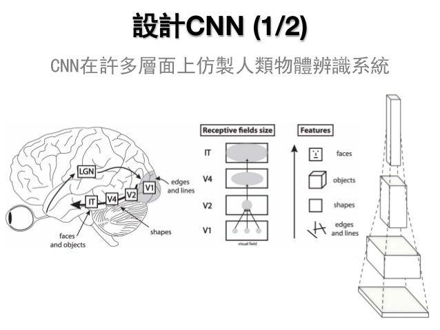 設計CNN (1/2) CNN在許多層面上仿製人類物體辨識系統