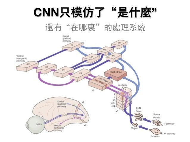 "CNN只模仿了""是什麼"" 還有""在哪裏""的處理系統"